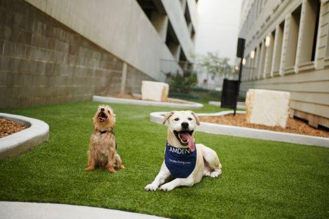 Dog Park at Camden Travis Street Apartments in Houston, TX