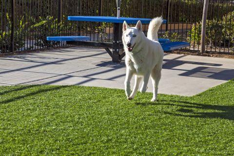 Dog Park at Camden Vineyards Apartments in Murrieta, CA