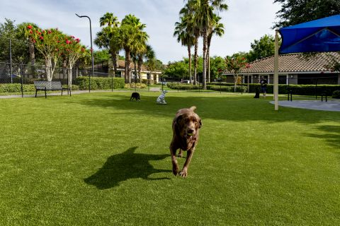 Dog Park at Camden World Gateway Apartments in Orlando, FL