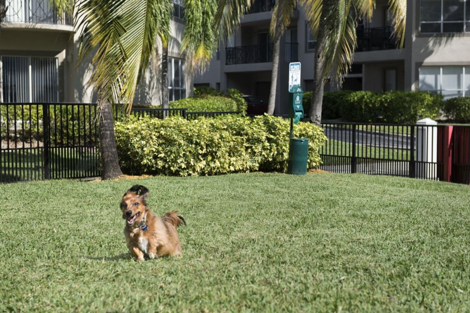 Dog Park at Camden Aventura Apartments in Aventura, FL