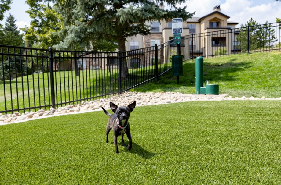 Spacious dog park at Camden Denver West Apartments in Golden, CO