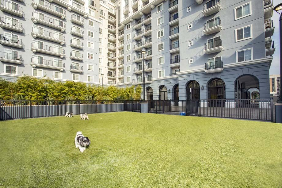 Private Off Leash Dog Park with Turf at Camden Harbor View Apartments in Long Beach, CA