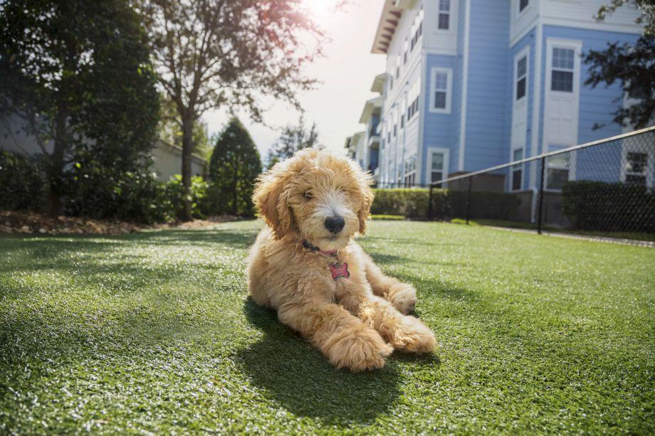 Dog Park at Camden LaVina Apartments in Orlando, FL