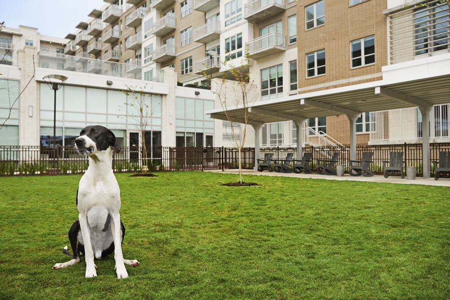 Dog Park at Camden McGowen Station Apartments in Houston, TX