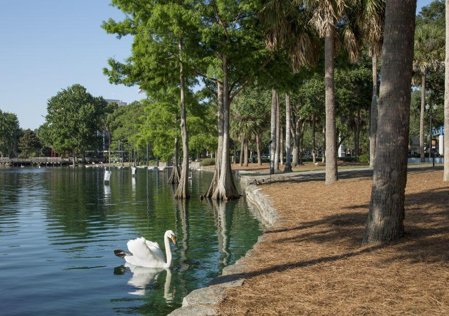 Lake Eola with Swan at Camden Orange Court Apartments in Orlando, FL