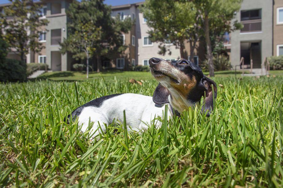 Pet Friendly at Camden Sierra at Otay Ranch Apartments in Chula Vista, CA