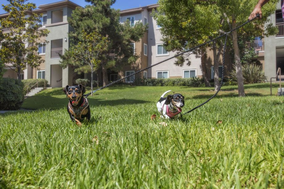 Green Grass and Beautiful Landscaping Perfect for Dog Walking at Camden Sierra at Otay Ranch Apartments in Chula Vista, CA