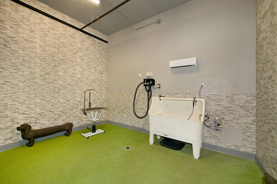 Dog Spa at Camden Highland Village townhomes in Houston, TX