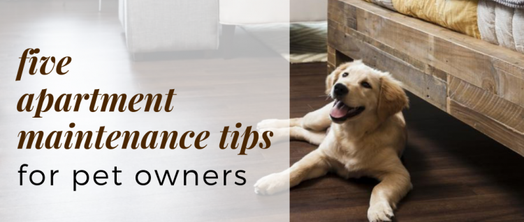 5 Apartment Maintenance Tips for Pet Owners