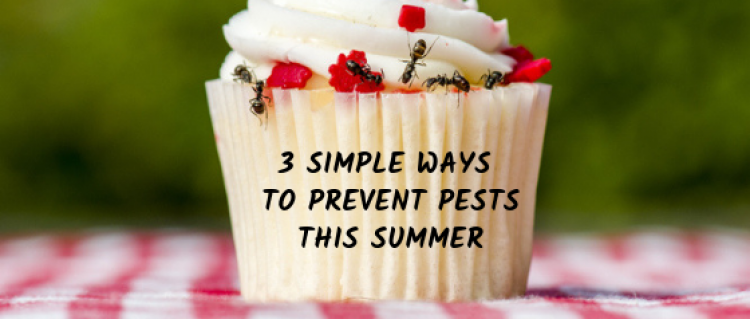 3 Simple Ways To Prevent Pests This Summer