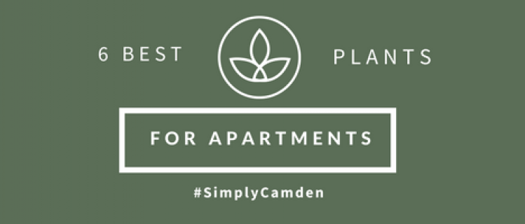 6 Best Plants For Apartments