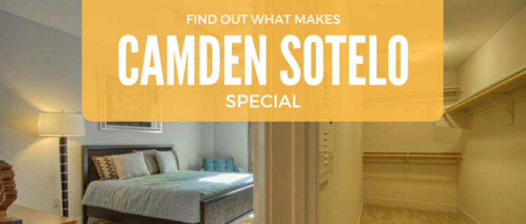Find Out What Makes Camden Sotelo Special
