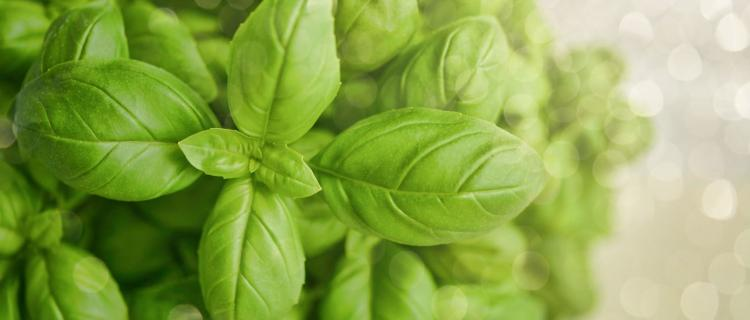 How to Create an Herb Garden in an Apartment