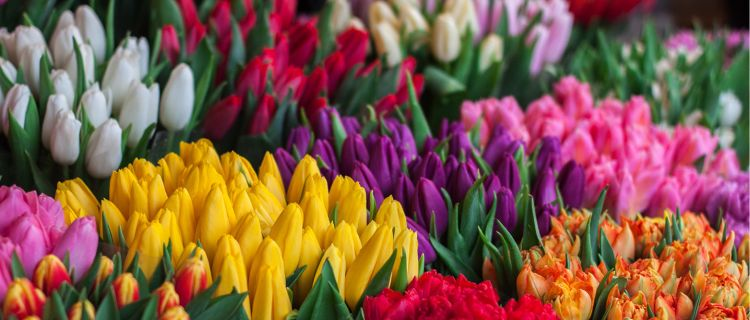 Spring Flowers for your Camden Apartment