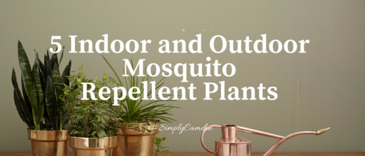 5 Indoor And Outdoor Mosquito Repellent Plants Camdenliving Com Valerie Carter,How To Update Laminate Kitchen Cabinets