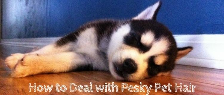 How to Deal with Pesky Pet Hair