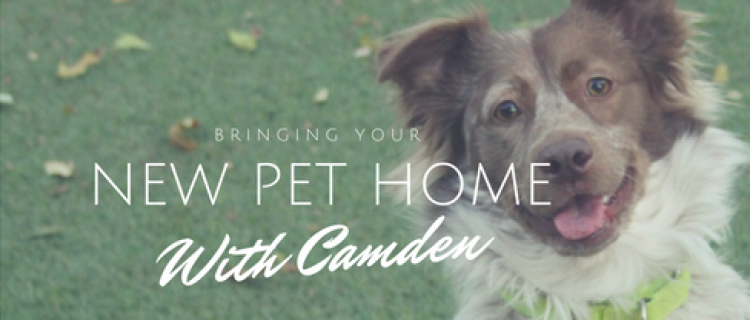 Bringing your new pet home with Camden