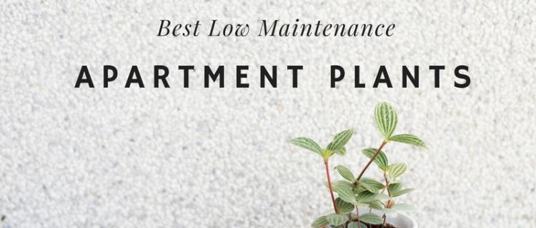 Best low maintenance apartment plants for Low maintenance summer flowers