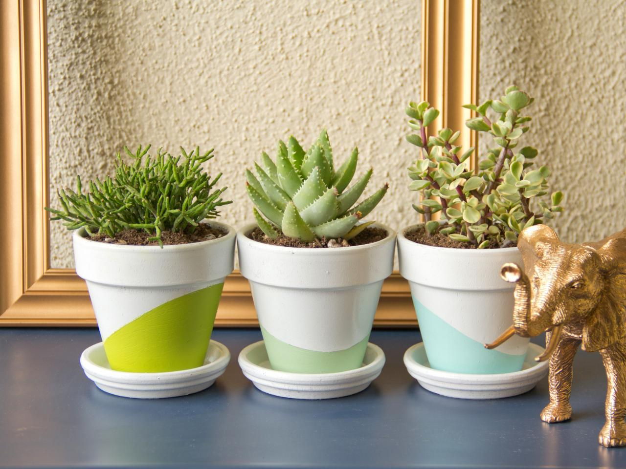 succulents-best-apartment-plants