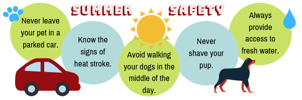 Summer Pet Safety Info-graphic