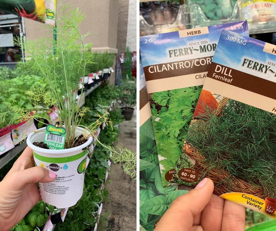 herb-garden-starter-plants-seeds