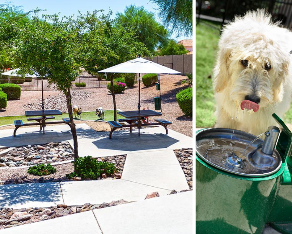 Shaded Dog Park and Dog Water Fountain